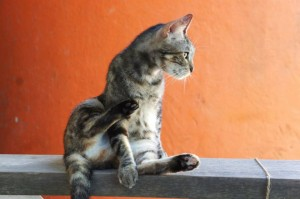 cat_grooming