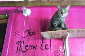 meowtel